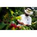 Guatemala SHB El Jaguar 500g Filtre Kahve (Haftalık Kavrum)